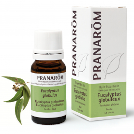 Eucalyptus globuleux - 10 ml | Pranarôm