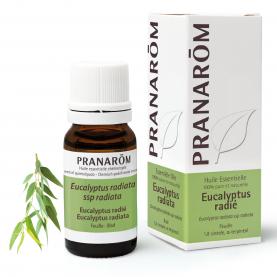 Eucalyptus radiata - 10 ml | Pranarôm