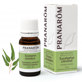 Eucalyptus citronné - 10 ml | Pranarôm