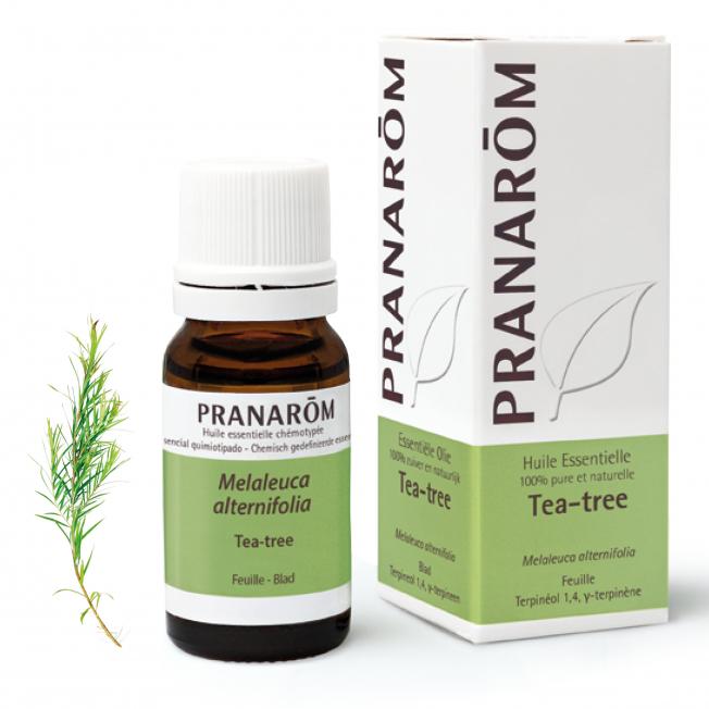Tea-tree - 10 ml   Pranarôm