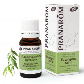 Eucalyptus radié - 10 ml | Pranarôm