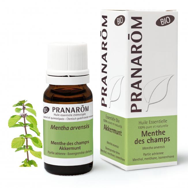 Menthe des champs - 10 ml   Pranarôm