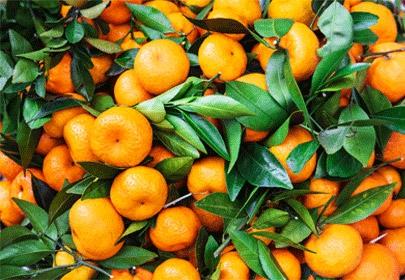 Tout savoir sur l'essence de Mandarine